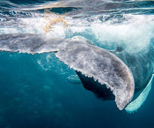 bubbles, lovely, and moby dick image