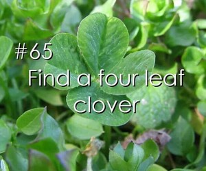 four leaf clover, wish, and bucket list image
