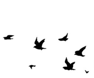 birds, black and white, and gone image