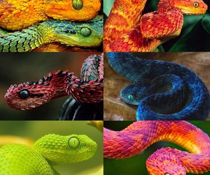 Collage, colorful, and snake image
