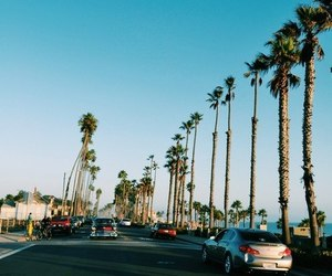 palm trees, sun, and street image