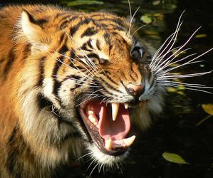 amazing, angry, and animal image