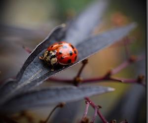 nature, ladybug, and colorous image
