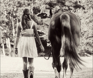 horse, beautiful, and equine image