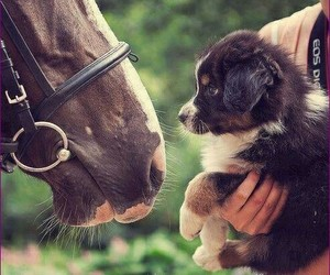 horse, dog, and puppy image