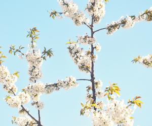 beautiful, flowers, and ylvase image