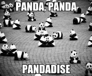 panda, pandadise, and paradise image