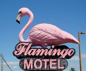 flamingo, motel, and pink image