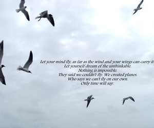 birds, Dream, and Flying image