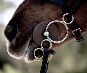 equestrian and horse image