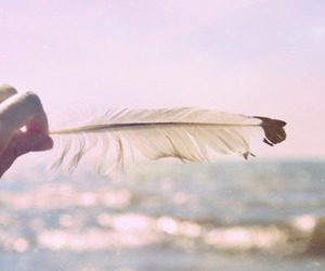 feather, ocean, and photography image