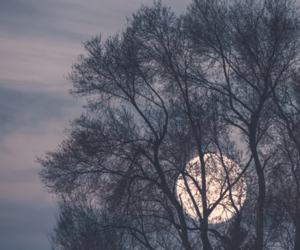 moon, tree, and night image