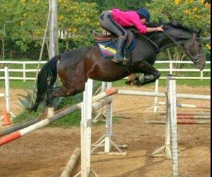 amazing, equestrian, and horse image