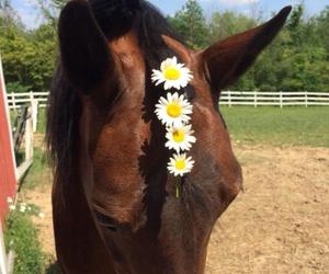 daisy and horse image