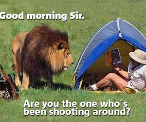 busted, funny, and good morning image