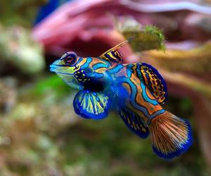 amazing, colour, and sea image