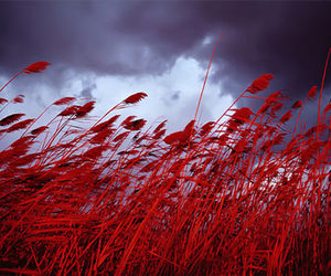 red fields image