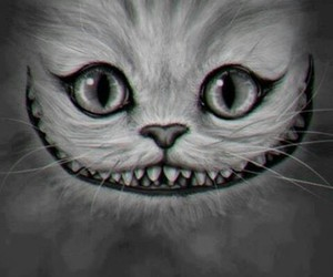 cat, smile, and alice image