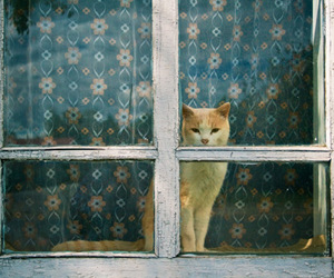 cat, window, and vintage image