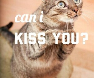 cat, kiss, and kiss you image