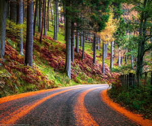 life, road, and nature image