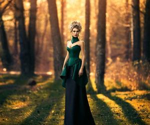 beautiful, forest, and picture image