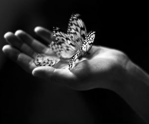 butterfly and hand image