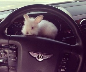 car, cute, and bunny image