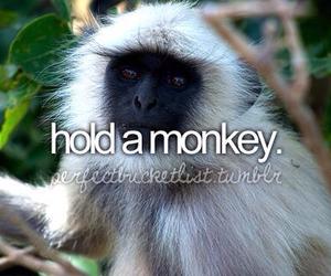 monkey, before i die, and animal image