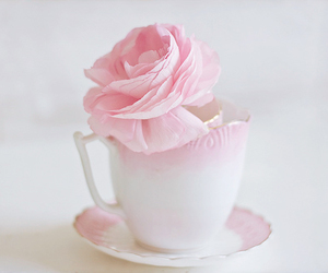 pink, rose, and cup image