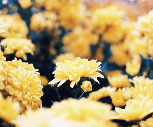 flowers, yellow, and landscape image