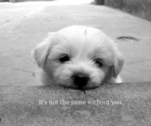 black and white, puppy, and text image