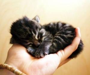kitten, animal, and cat image