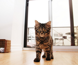 apartment, brown, and kitten image