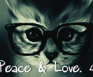 cat, glass, and peace and love image
