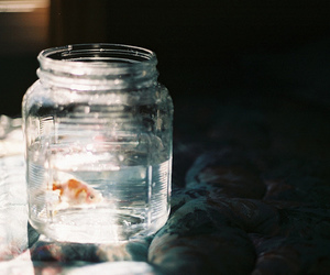 fish, water, and photography image