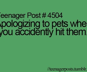 pet, teenager post, and funny image