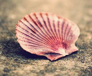 photography, shell, and sea image