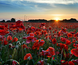 dawn, field, and flowers image