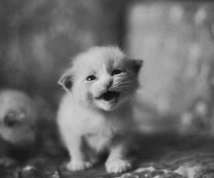 cute, cat, and black and white image