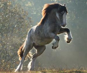 beautiful, draft, and horse image