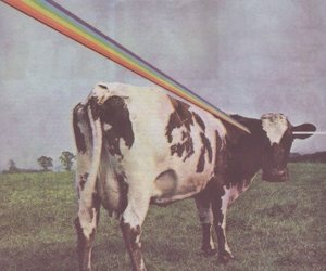 Pink Floyd, cow, and rainbow image