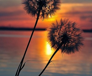 sunset, flowers, and sun image