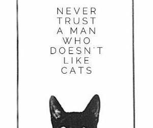 cat, man, and trust image