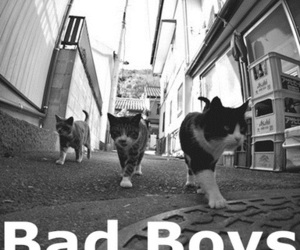 cat, bad boys, and boy image