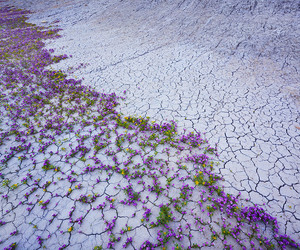 cracks, dry terrain, and flowers image