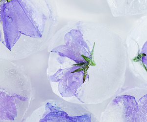 flowers, ice, and ice cubes image
