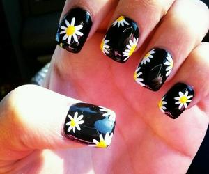 daisies and nails image