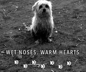 black and white, dog, and pets image