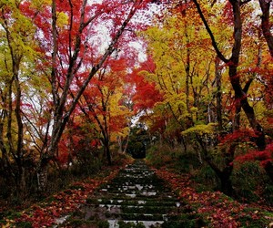 beautiful, colorful, and japan image
